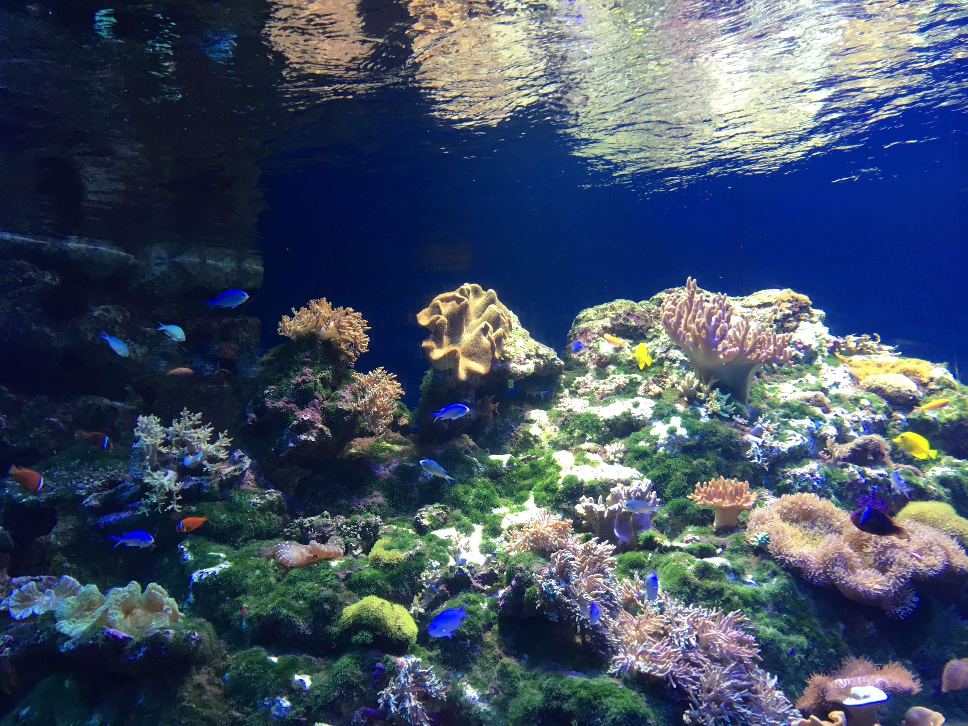 「挙式ができる水族館」を知っていたら教えて頂きたいです。