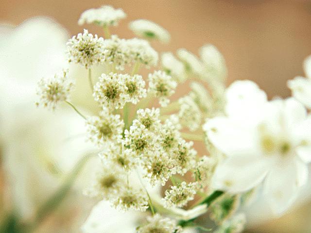 プロポーズで花束を渡したいのですが、花についての知識が乏しいです…アドバイス下さい